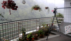 Balcony overlooking the canopy of the rainforest